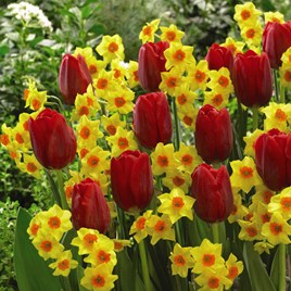 Spring Companions Bulb Collections