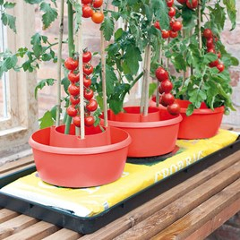 Plant Halos Red (Pack of 3)