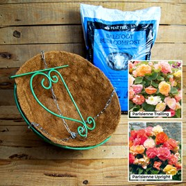 Teardrop Hanging Basket Begonia Kit - Red Wine