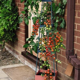4 Tier Self Watering Tomato Tower