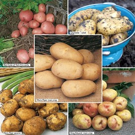 Seed Potatoes - Sutton's Premium Selection