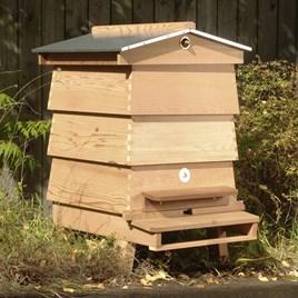 WBC Hive Starter Kit