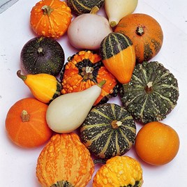 Gourd Seeds - Small-Fruited Mixed