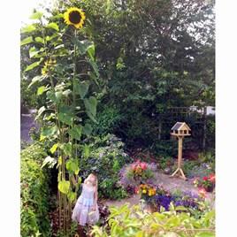Sunflower Seeds - Giraffe