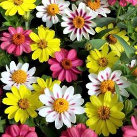Flower Pots & Stands