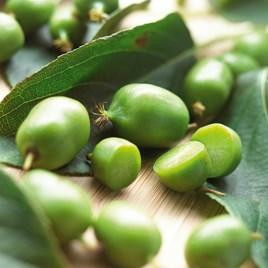 Organic Kiwi Plant - Issai