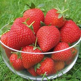 Strawberry Vibrant Misted Tip (6)
