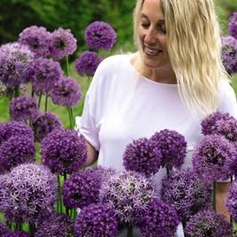 Allium Cut Flower Collection