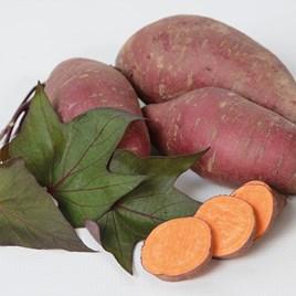 Sweet Potato Tatakoto 10.5cm Pot x 1