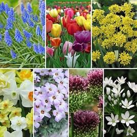 Spring Spectacular Colour Collection