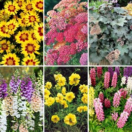 Potted Perennial Collection