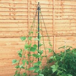 Garden Maypole