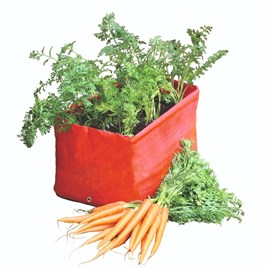 Carrot Patio Planters plus FREE seeds