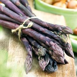 Asparagus Plant - Erasmus 3Ltr