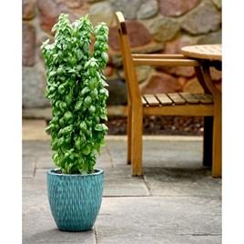 Basil Seeds - Everleaf Emerald Towers