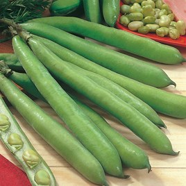 Broad Beans Dreadnought Seeds