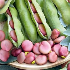 Broad Bean Karmazyn Seeds