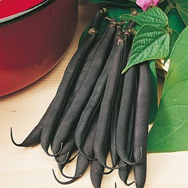 Dwarf French Bean Purple Teepee Seeds