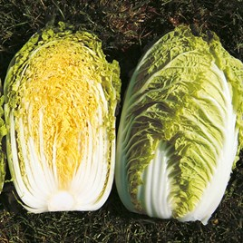 Cabbage Seeds Chinese - Richi F1