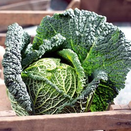 Cabbage (Savoy) Seeds - Preludium F1