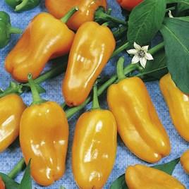 Pepper Seeds - Hamik