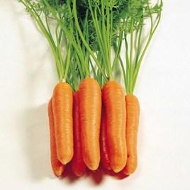 Carrot Seeds - Eskimo F1