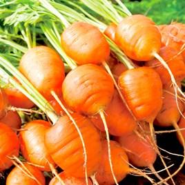 Carrot Seeds - Atlas