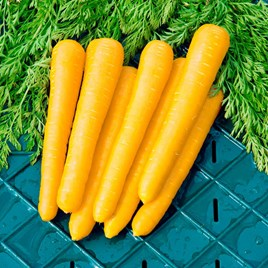 Carrot - F1 Gold Nugget