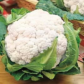 Cauliflower Seeds - Snowball