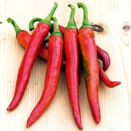 Pepper Chilli Seeds - Romital F1