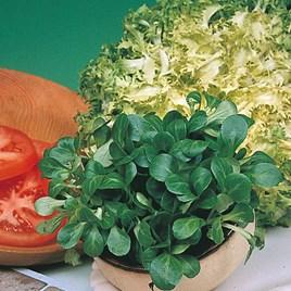 Corn Salad Seeds - Large Leaved