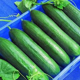 Cucumber - Paska F1
