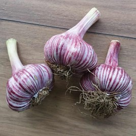 Garlic Bulbs - Rose Wight