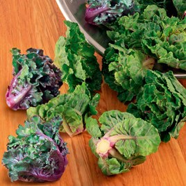 Brussels Sprout Seeds - Flower Sprout Variety