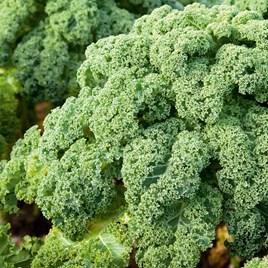Kale Reflex (12)