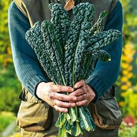 Kale Seeds - Nero Di Toscana