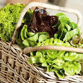 Lettuce Seeds - Mixture