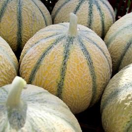 Melon Seeds - Edgar F1