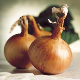Onion Seeds - Hytech F1