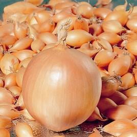 Onion Troy (250gm)