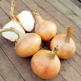 Onion Seeds - Hiball F1
