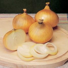 Onion Sets - F1 Centurion
