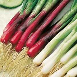 Spring Onion Red and White Mixed (20)