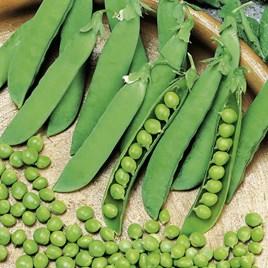 Pea Seeds - Alderman