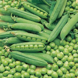 Pea Seeds - Early Onward