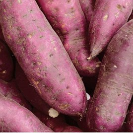 Sweet Potato Murasaki 29 (6)