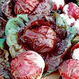 Radicchio Seeds - Palla Rossa Red Devil