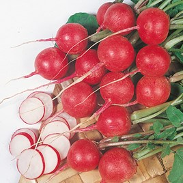 Radish Seeds - Cherry Belle