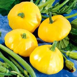 Squash Seeds - Sunburst F1