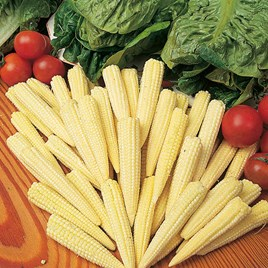 Sweet Corn Seeds - Minipop F1